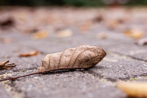 Close-up shot van gedroogde herfstbladeren op een straat grond