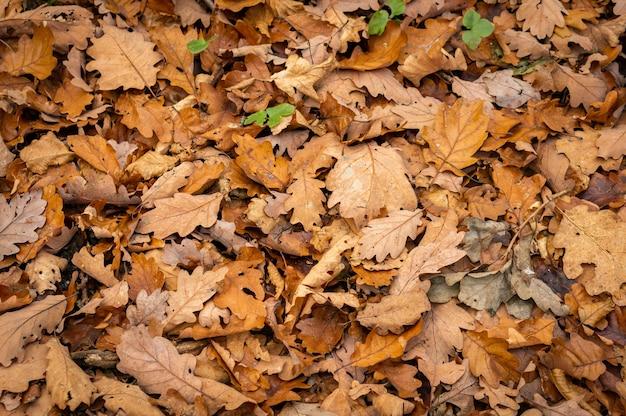 Close-up shot van gouden bladeren op de grond gevallen met kleine groene planten die er doorheen groeien
