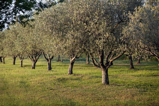 Close-up shot van groeiende bomen in het veld onder het zonlicht