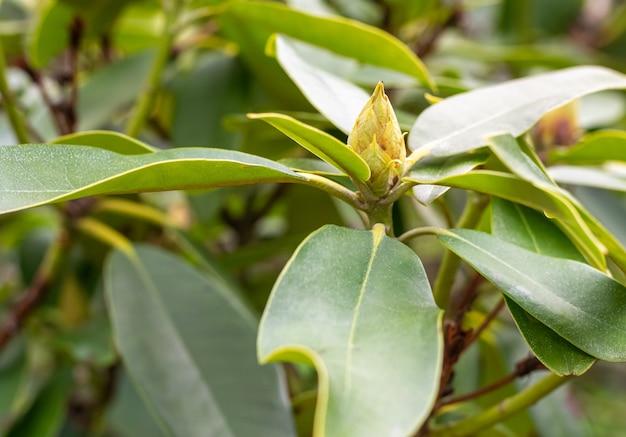 Close-up shot van groeiende groene planten
