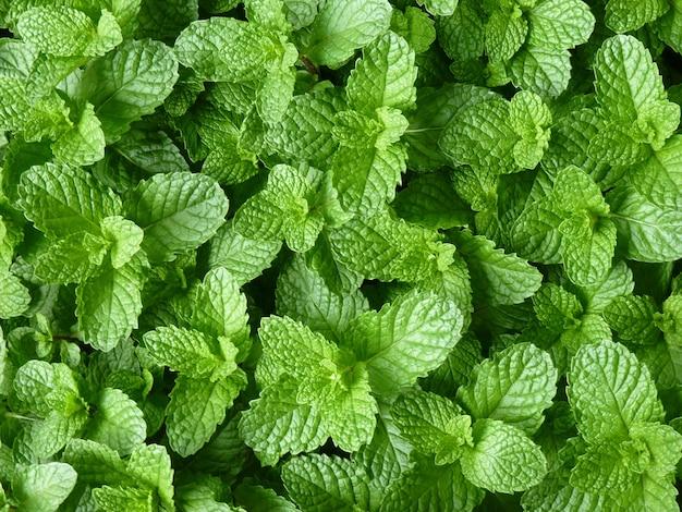 Close-up shot van groeiende planten in het groen
