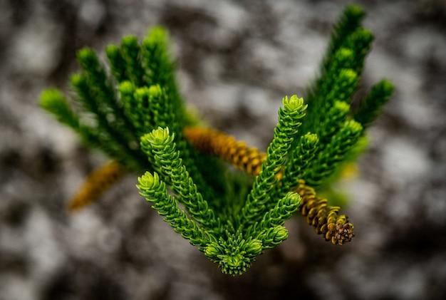 Close-up shot van groene verse bladeren met wazig
