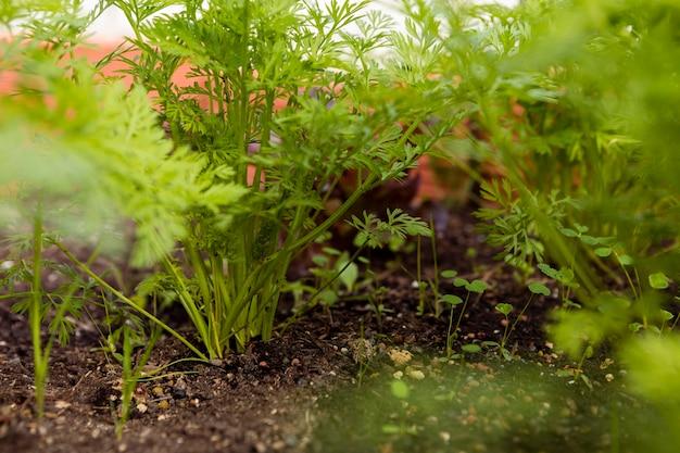 Close-up shot van groenten in de bodem