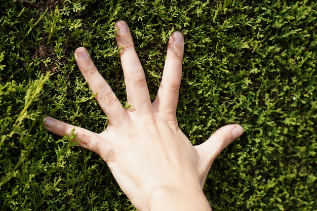 Close-up shot van hand op groen gras