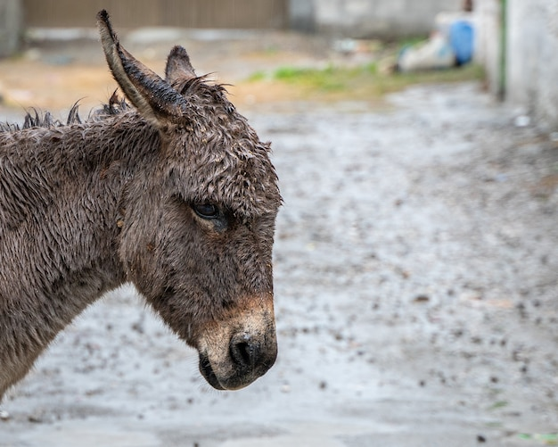 Close-up shot van het gezicht van een ezel op een bewolkte dag