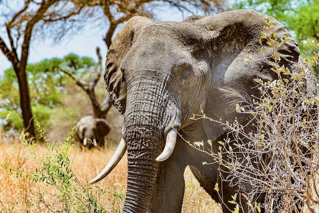 Close-up shot van het hoofd van een schattige olifant in de wildernis