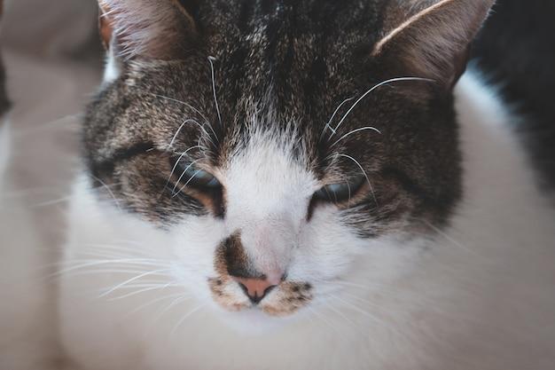 Close-up shot van het hoofd van een schattige witte en grijze kat met groene ogen