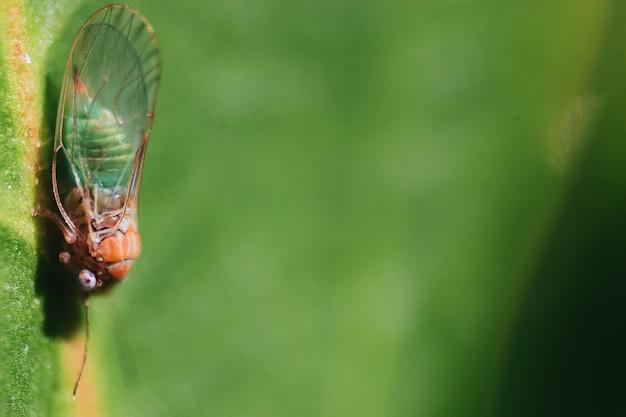 Close-up shot van het insect op een natuurlijke omgeving