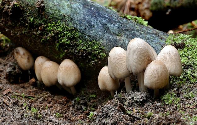Close-up shot van het kweken van paddenstoelen in het bos overdag