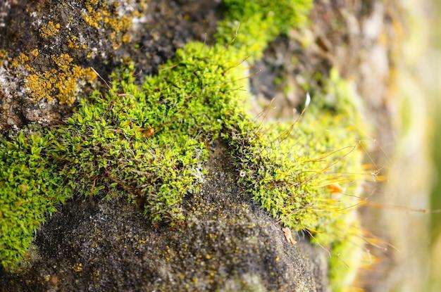 Close-up shot van het mos van het stenen oppervlak