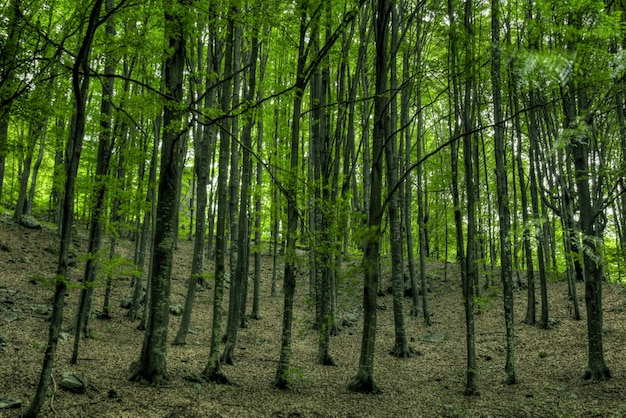 Close-up shot van hoge bomen in het midden van een groen bos