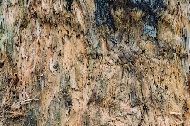 Close-up shot van houten structuur van een boom