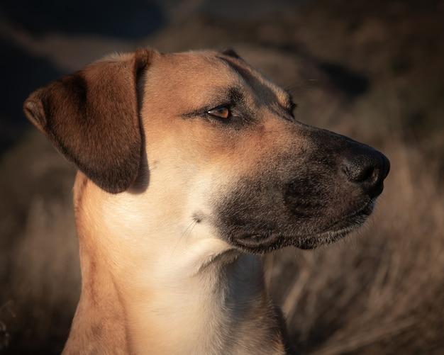 Close-up shot van jonge hond