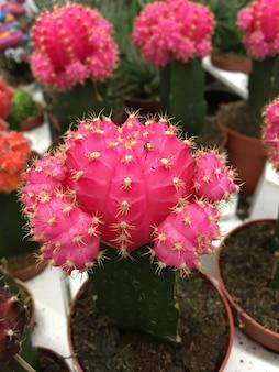 Close-up shot van kleurrijke en mooie cactussen of cactussen binnenshuis