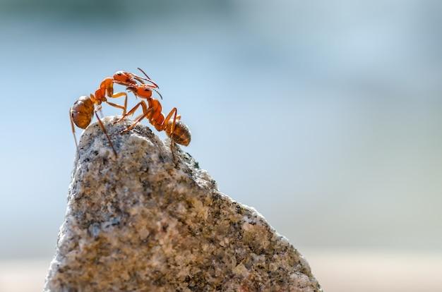 Close-up shot van mieren op een steen