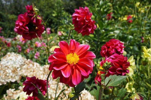 Close-up shot van mooie grote roze bloemen in een veld met verschillende bloemen op een heldere dag