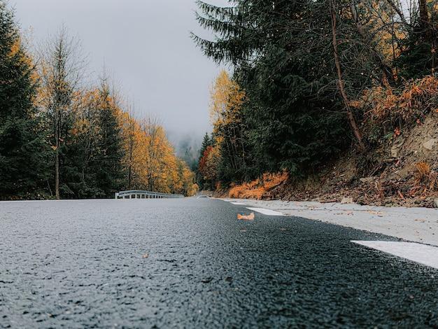 Close-up shot van nat asfalt van een landweg