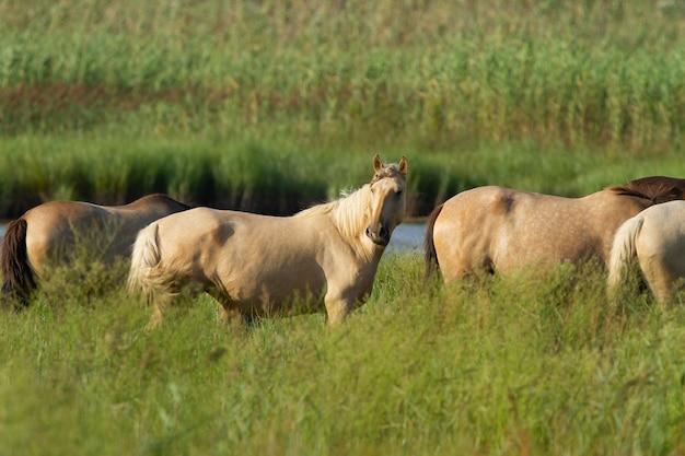 Close-up shot van paarden in een veld