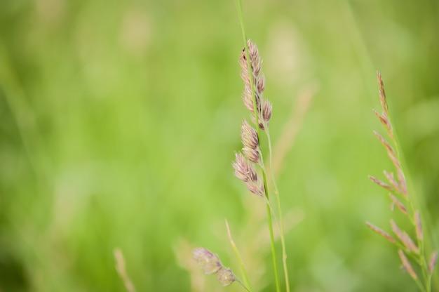 Close-up shot van prachtig groen op het platteland