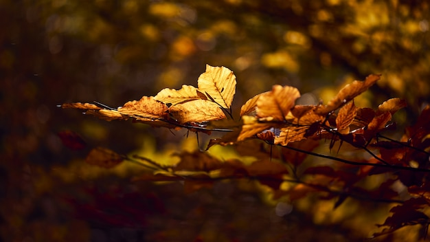 Close-up shot van prachtige gouden bladeren op een tak met een onscherpe achtergrond