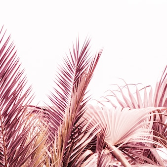 Close-up shot van prachtige paarse en roze planten in een woestijn