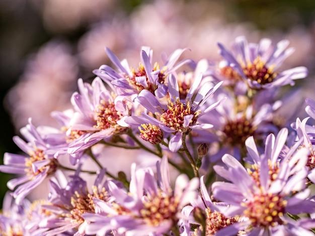 Close-up shot van roze bloemen in een veld