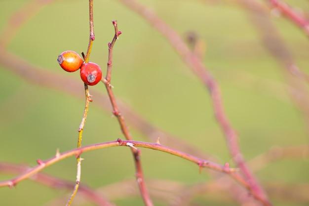 Close-up shot van twee gekleurde oranje en rode vruchten