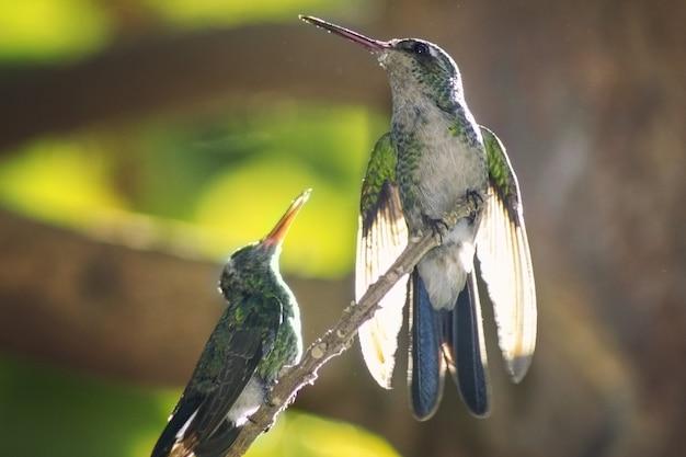Close-up shot van twee kolibries neergestreken op een boomtak