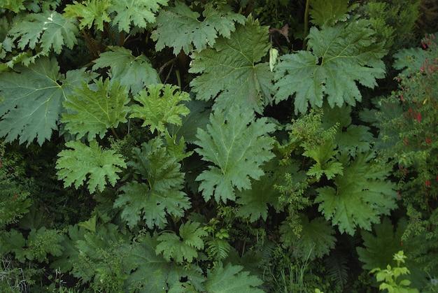 Close-up shot van vers groen gebladerte - perfect voor achtergrond of behang