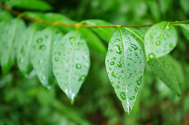 Close-up shot van verse groene bladeren bedekt met dauwdruppels