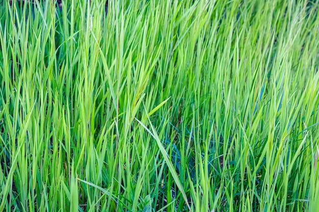 Close-up shot van verse groene planten overdag