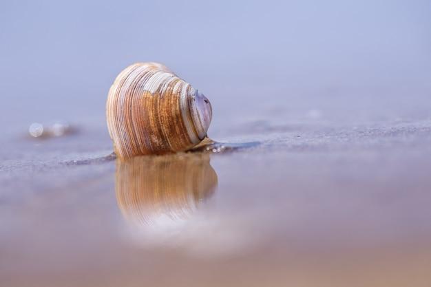 Close-up shot van zeeschelp op zand