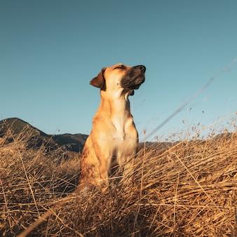 Close-up shot van zwarte mond cur hond in het veld