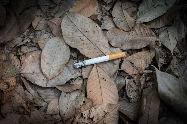 Close-up sigarettenpeuk niet-gerookt achteloos worden in het droge gras op de grond gegooid, wat een gevaarlijke bosbrand, eclogische cotostrofie veroorzaakt door een menselijk foutconcept