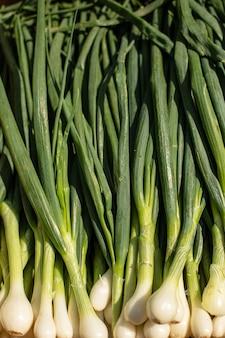 Close-up stockfoto van heldergroene lente-ui, lente-ui, stapel in zonlicht.