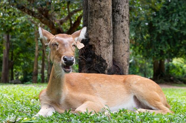 Close-up van antilope in de natuur.