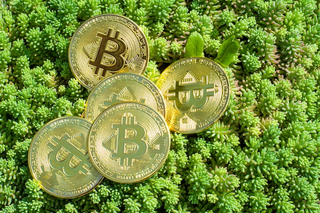 Close-up van bitcoins op planten