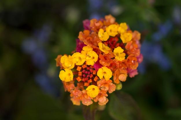 Close-up van bloembloesems, lake of the woods, ontario, canada