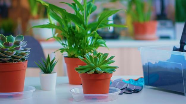 Close-up van bloemen op keukentafel voorbereid om thuis te planten. met behulp van vruchtbare grond met schop witte keramische bloempot en bloemkamerplanten klaar om thuis te worden geplant huis tuinieren voor decoratie