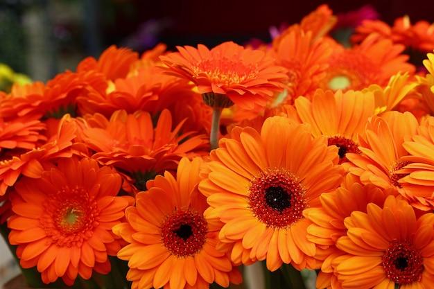 Close-up van boeketten van verse oranje kleur gerber madeliefjebloemen met op retail display, hoge hoek bekijken