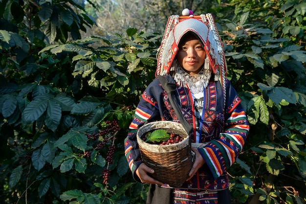 Close-up van boeren die arabica-koffiebonen verzamelen op koffieplanten in de provincie chiang rai