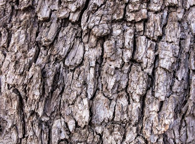 Close up van boomschors textuur