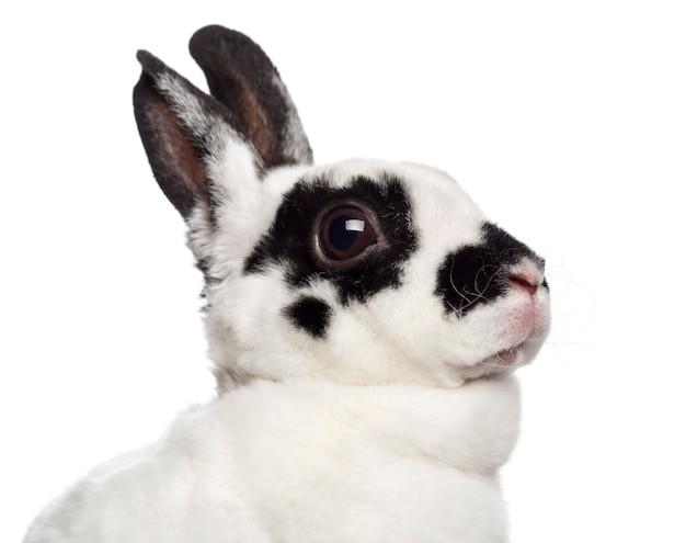 Close-up van dalmatische konijn tegen wit oppervlak