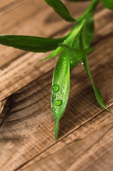 Close-up van de bladeren van de bamboe plant op houten oppervlak