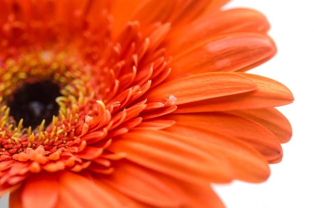 Close-up van de bloem