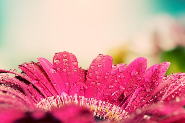 Close-up van de bloemblaadjes met waterdruppels