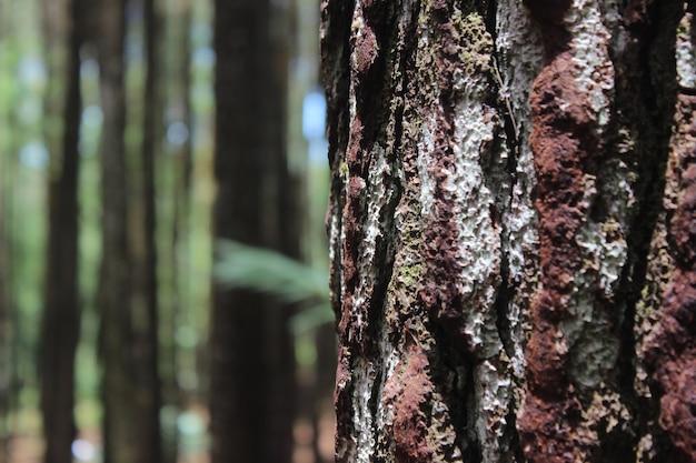 Close-up van de boomstam
