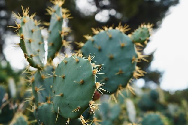 Close-up van de doornen van een cactus