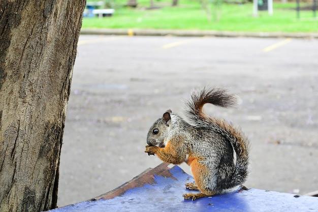 Close-up van de eekhoorn eten
