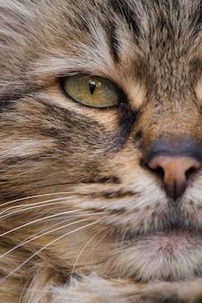 Close-up van de gestreepte kat